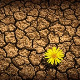 O Que Nos Torna Humanos? | # 9.A Esperança